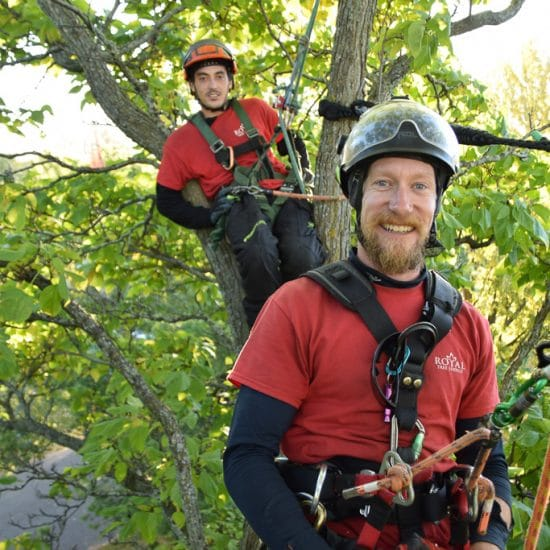 Skilled arborists cable